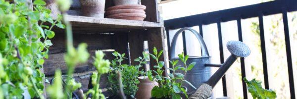 Flere dyrker have på altanen – kom i gang med ekspertens bedste råd